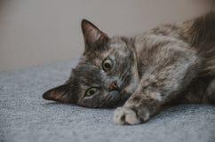 Kot, bawić się, jedzie na stronie Zdjęcie Stock