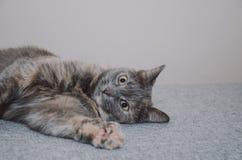 Kot, bawić się, jedzie na stronie Obraz Stock