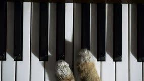 Kot bawić się pianino zbiory