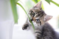 Kot bawić się z liść Obrazy Royalty Free