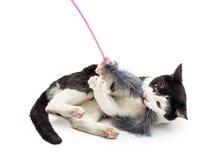 Kot Bawić się Z piórko zabawką Zdjęcia Royalty Free