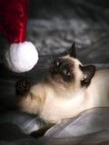 Kot bawić się z Santa kapeluszem Fotografia Royalty Free