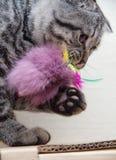 Kot bawić się z zabawką Zdjęcia Stock