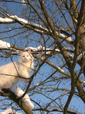 kot biała drzewna zima Fotografia Stock