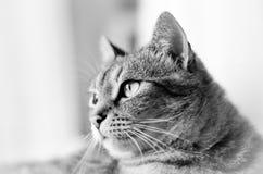 Kot biały i czarny obraz stock