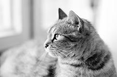 Kot biały i czarny zdjęcia stock
