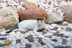 Kot bierze odpoczynek Zdjęcia Royalty Free