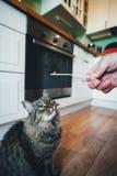 Kot bierze pigułkę obrazy stock
