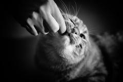Kot bierze pigułkę zdjęcie royalty free