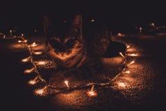 Kot & bożonarodzeniowe światła Fotografia Royalty Free