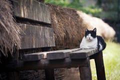 Kot chłodzi na ganeczku Obrazy Stock