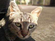 Kot chce atakować Fotografia Royalty Free