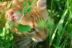 kot chujący Obraz Stock