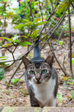 Kot chuje w krzakach Obraz Stock
