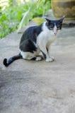 kot ciekawił odosobnionego spojrzenia strzału siedzącego pracownianego biel Fotografia Stock