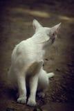 kot ciekawił odosobnionego spojrzenia strzału siedzącego pracownianego biel Obrazy Stock