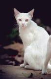 kot ciekawił odosobnionego spojrzenia strzału siedzącego pracownianego biel Fotografia Royalty Free