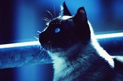 Kot ciekawi widzieć świat zdjęcia stock