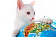 kot ciekawy Obraz Stock