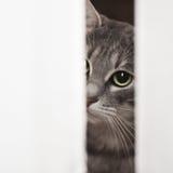 kot ciekawy zdjęcia stock