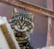 kot ciekawy Obrazy Stock