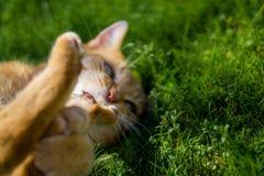Kot cieszy się słońce w ogródzie fotografia stock