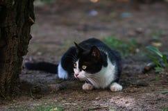 Kot czaije się drzewem Obrazy Royalty Free