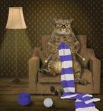 Kot dziewiarka 1 zdjęcia royalty free
