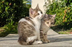 Kot figlarki bawić się dzikich bezpański Fotografia Royalty Free