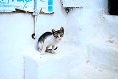 Kot gapi się prosto kamera Zdjęcie Stock