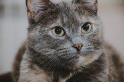 Kot gapi się up Obrazy Stock