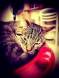 Kot gnuśny zdjęcia royalty free