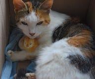 Kot grże kurczaka Zdjęcia Stock