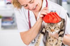 Kot grypa zdjęcie stock