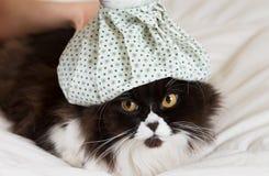 Kot grypa zdjęcie royalty free