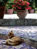 Kot i flowerpot Obraz Stock