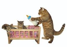 Kot i jego kocimy się 2 obrazy royalty free