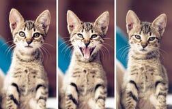 Kot i jego wygłupy obraz stock