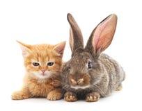 Kot i królik Zdjęcia Stock