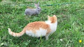 Kot i królik zbiory