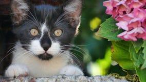 Kot i kwiat zdjęcia royalty free