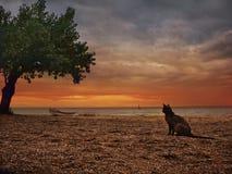 Kot i morze Zdjęcia Stock