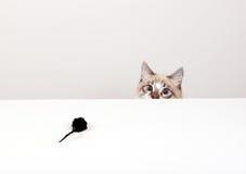 Kot i mysz Obraz Stock