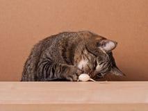 Kot i mysz Zdjęcia Royalty Free