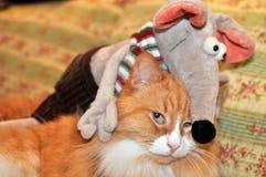 Kot i mysz Zdjęcie Royalty Free