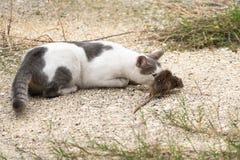 Kot i mysz w naturze zdjęcia stock