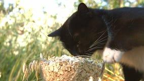 Kot i oatmeal w naturze zbiory wideo