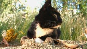 Kot i oatmeal w naturze zdjęcie wideo
