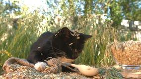 Kot i oatmeal w naturze zbiory