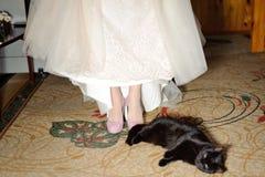 Kot i panna młoda zdjęcie royalty free